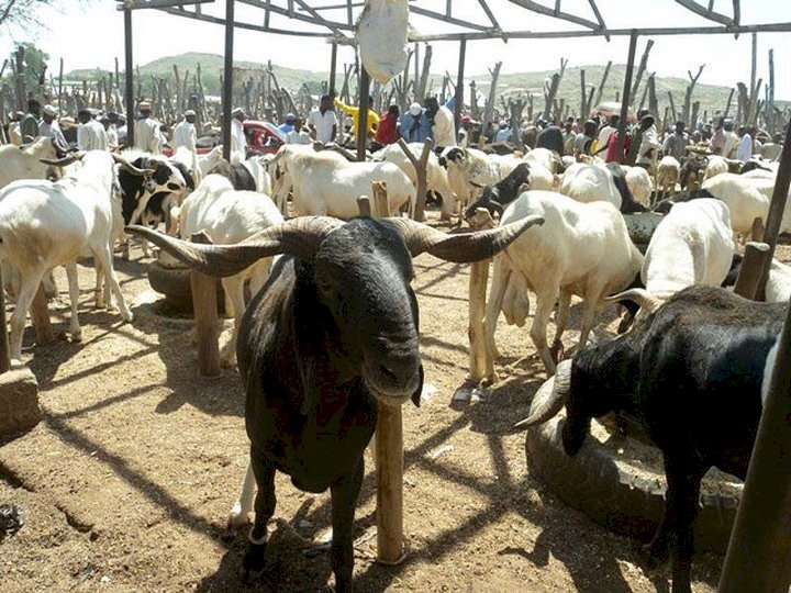 Ram costs N1million in Lagos as cattle traders' strike bites harder