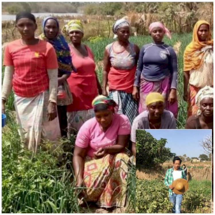The Gambia: Women gardeners cried as Chinese firm fight to acquire their lands