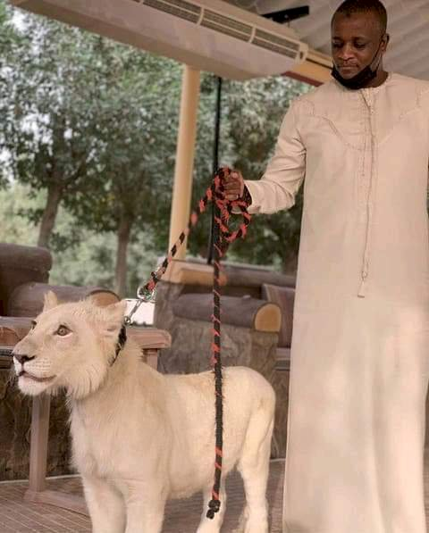 Buhari's Son in-law Poses With Rare Lion , Sets Tongue Wagging