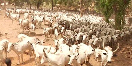 Benue: Herdsmen Paid N100m Fines In 3 Months – Miyetti Allah