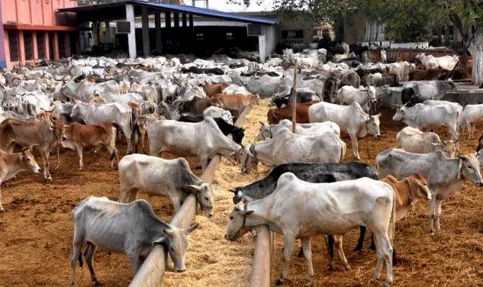Why Ranching Won't Work In Nigeria Now – Livestock Expert