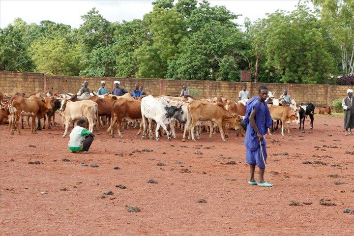 Mali: Tabital Pulaaku dénonce le processus de paix entre Peuls et Dogons
