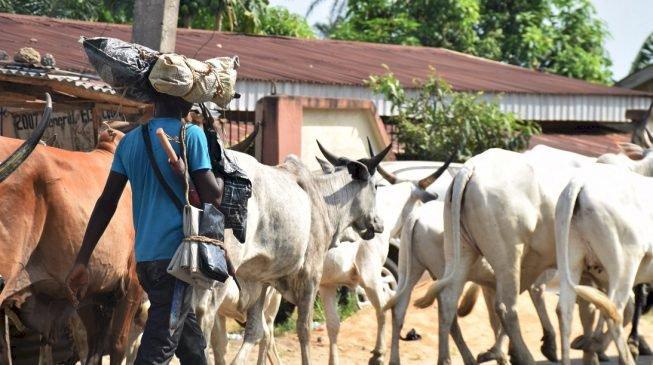 The Philosophy of the Fulani Herdsman