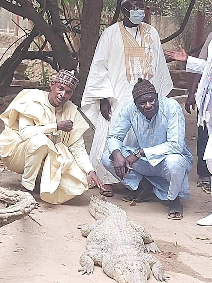 Fulani professor Dr Abubakar Girei visit The Kachikally crocodile pool is located in the heart of Bakau, Gambia